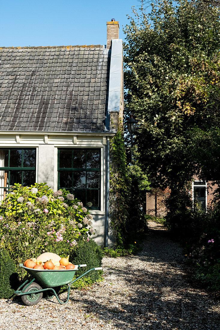 Pumpkins in wheelbarrow on garden path outside barn
