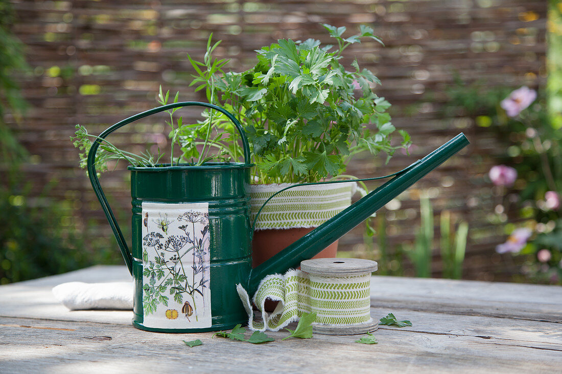Metal watering can with floral motif, potted herbs and ribbon