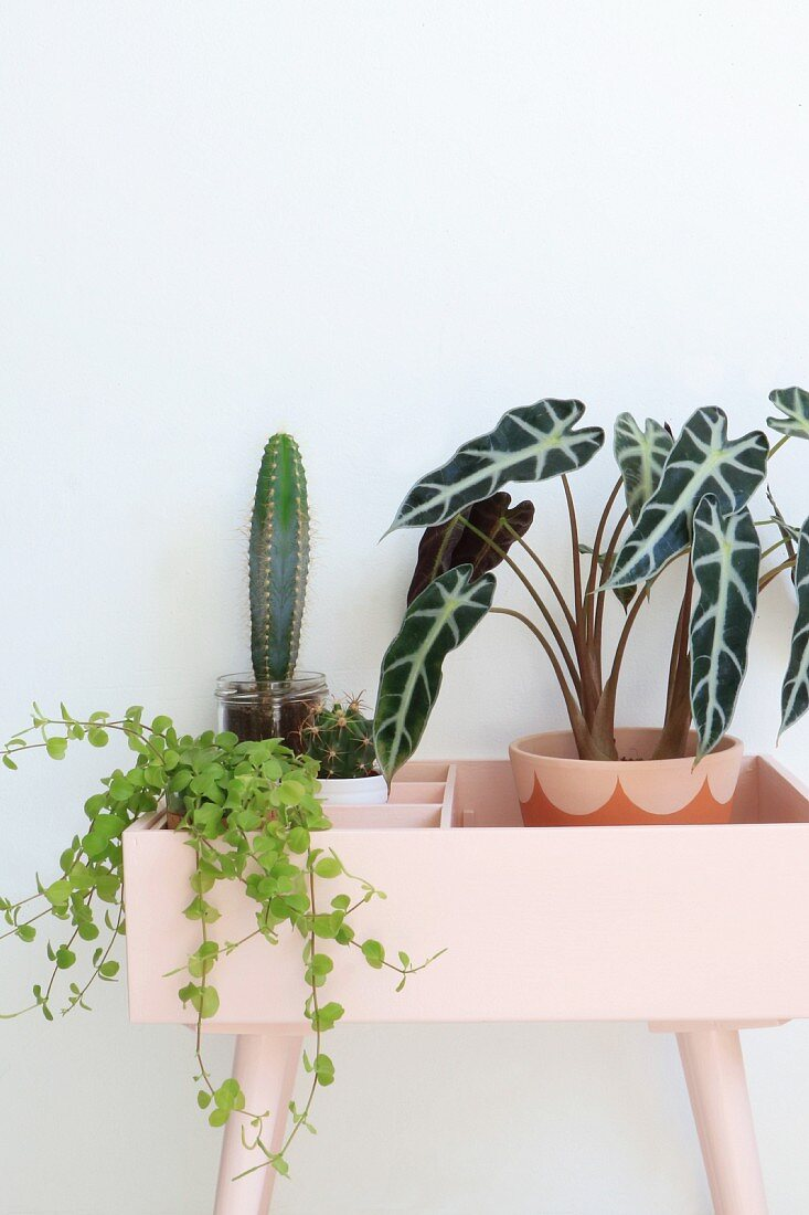 Various houseplants in pink plant stand
