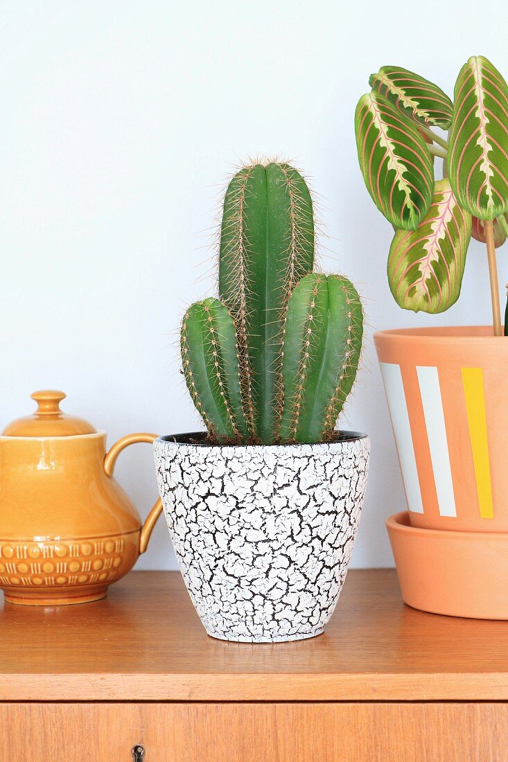 Cacti in retro planter next to painted terracotta pot