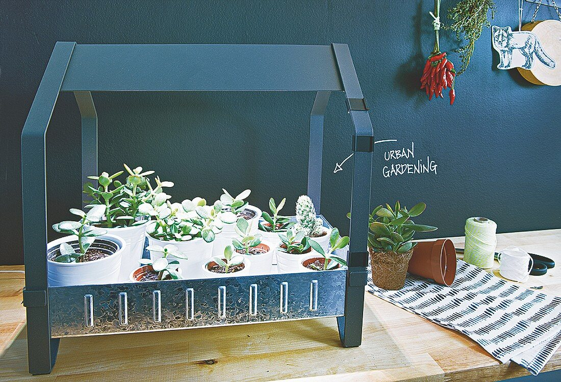 A mini greenhouse in front of a blackboard wall in the kitchen