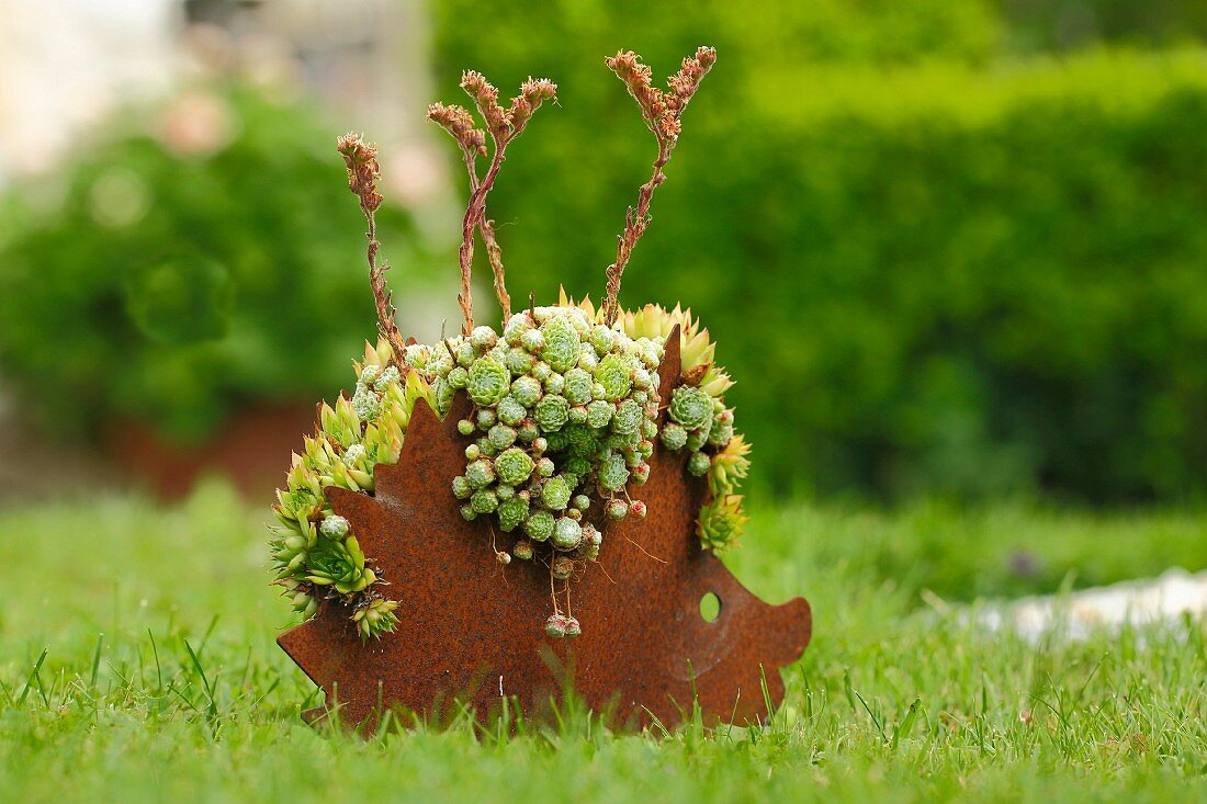 Metal hedgehog planted with succulents on lawn in garden