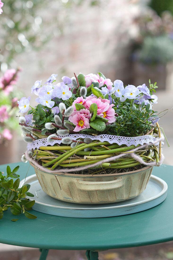 Viola cornuta Rocky 'Lavender Blush', Primula acaulis