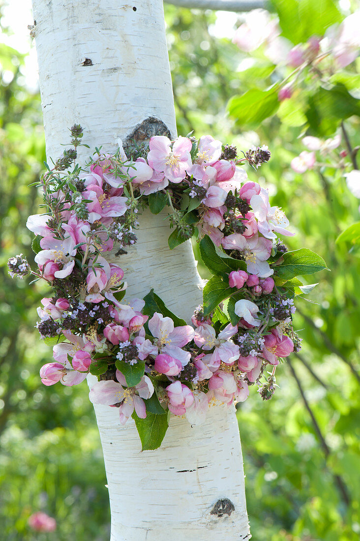 Wreath made of malus (ornamental apple) and thymus (thyme) on betula