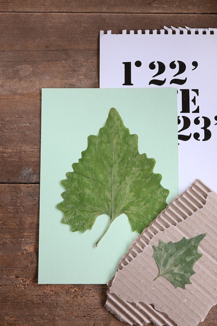 Pressed leaves on corrugated cardboard and paper