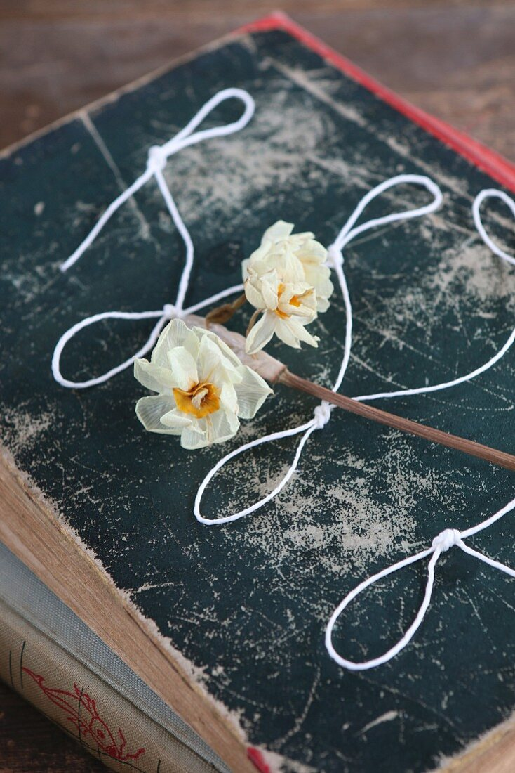Dried narcissus and knotted string on old book