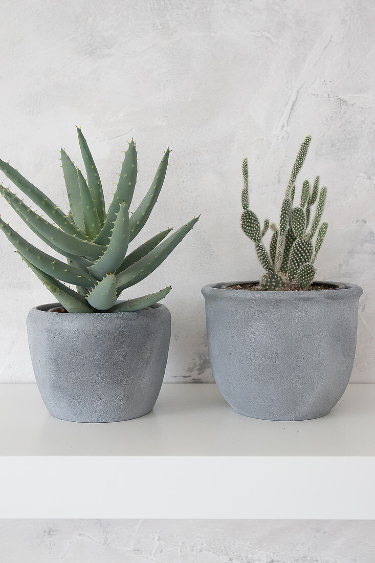 Succulent And Cactus In Cache Pots Buy Image 12371975 Living4media