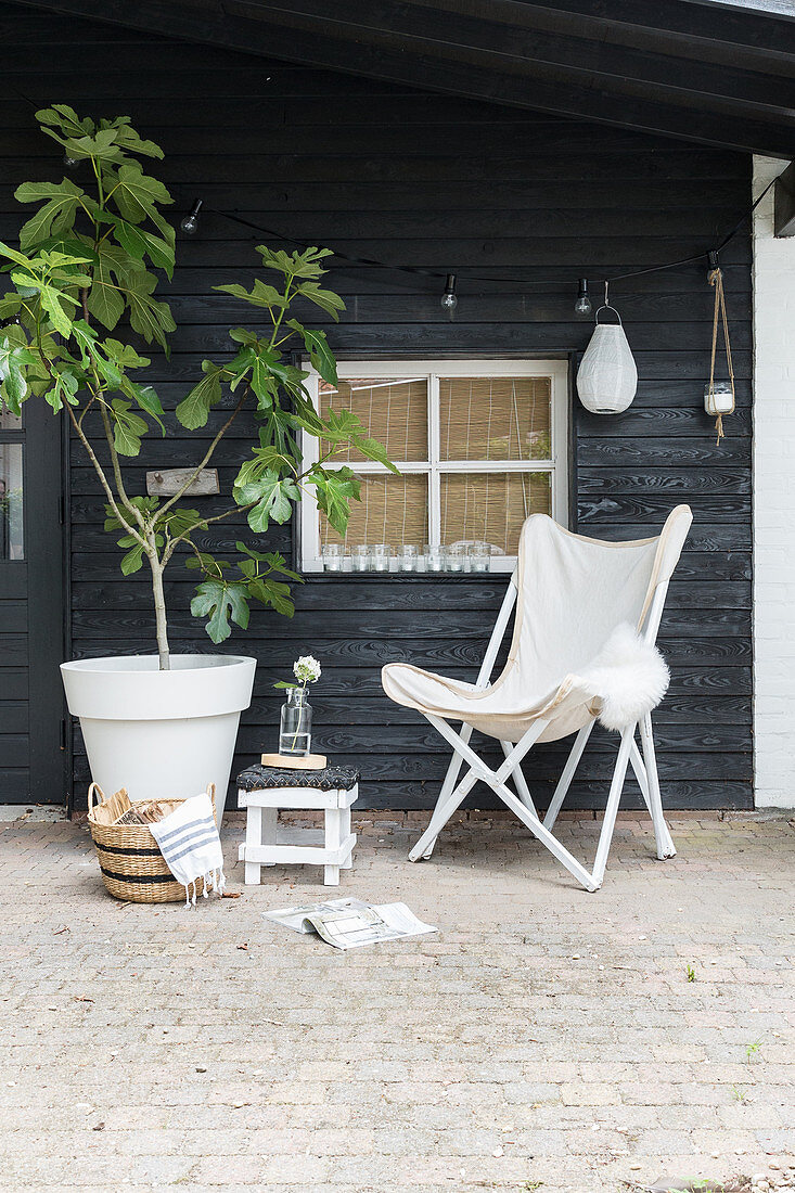 Potted fig tree, stool and Butterfly chair on roofed veranda