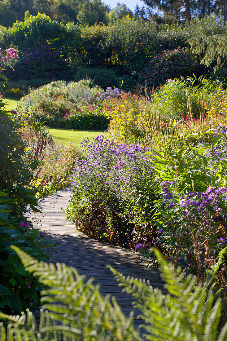 Wooden walkway leading through autumnal herbaceous borders with Michaelmas daisies