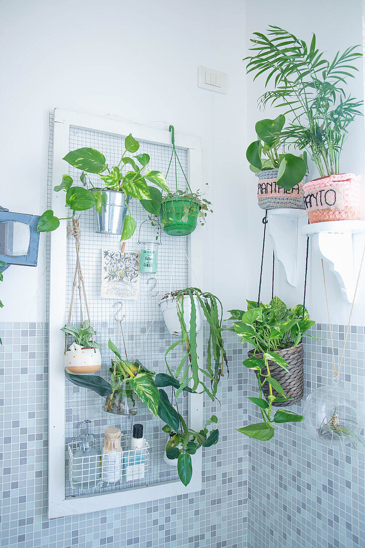 Houseplants in bathroom with mosaic tiles