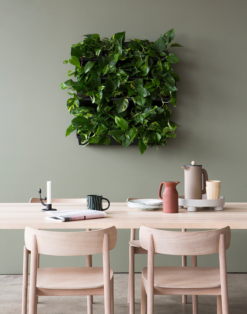 Devil S Ivy In Square Green Wall Planter Buy Image 13168717 Living4media