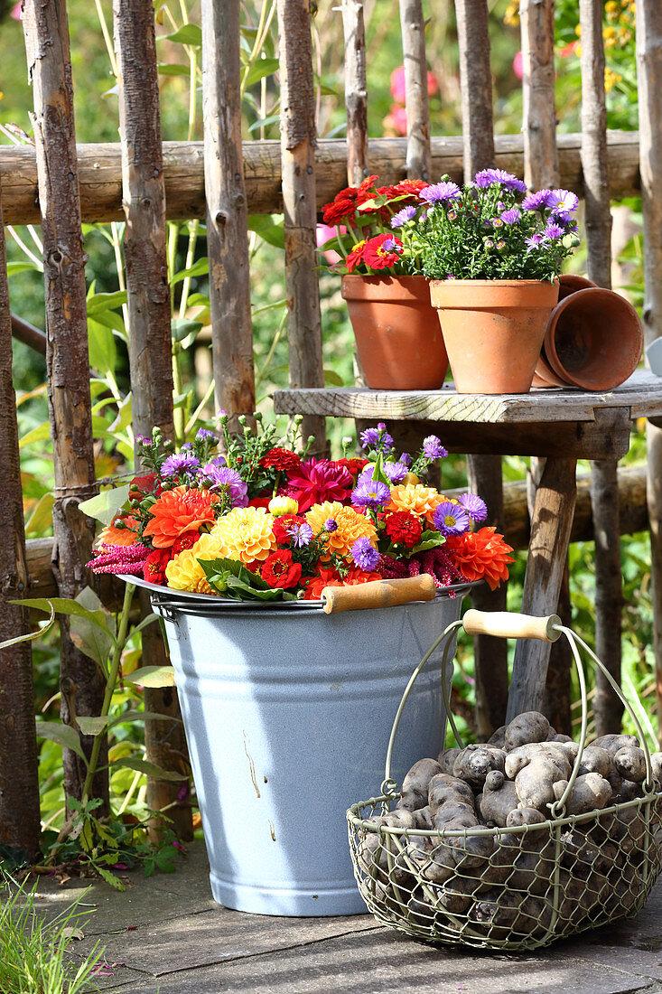 Late-summer arrangement of flower wreath and potatoes in garden