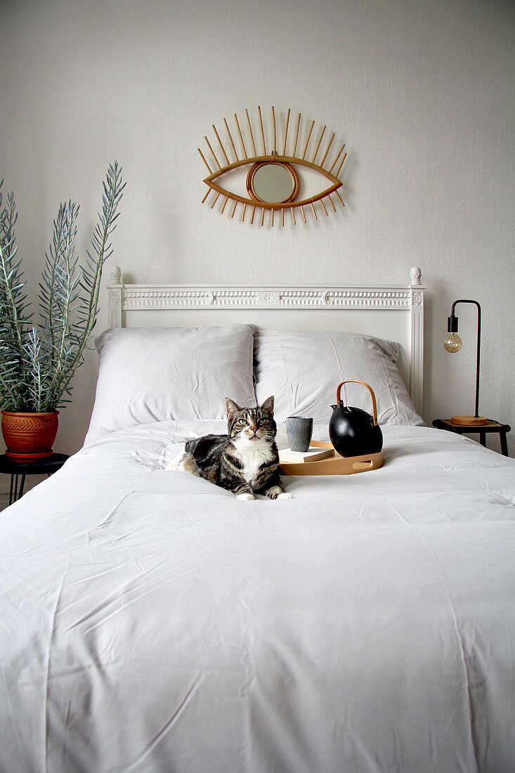 Cat and tray on bed below eye-shaped mirror