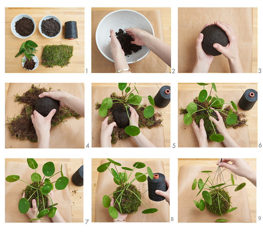 Instruction for making Kokedama (planted moss balls)