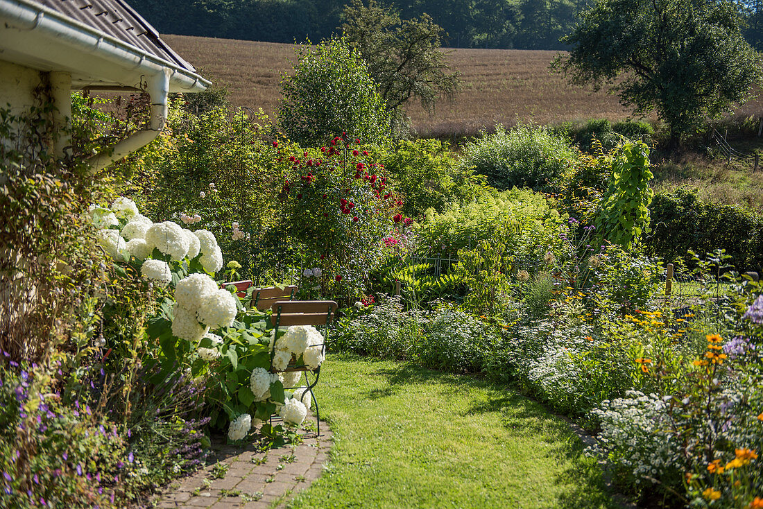 Grass path and beds with hydrangea 'Annabelle', summer flowers and climbing rose