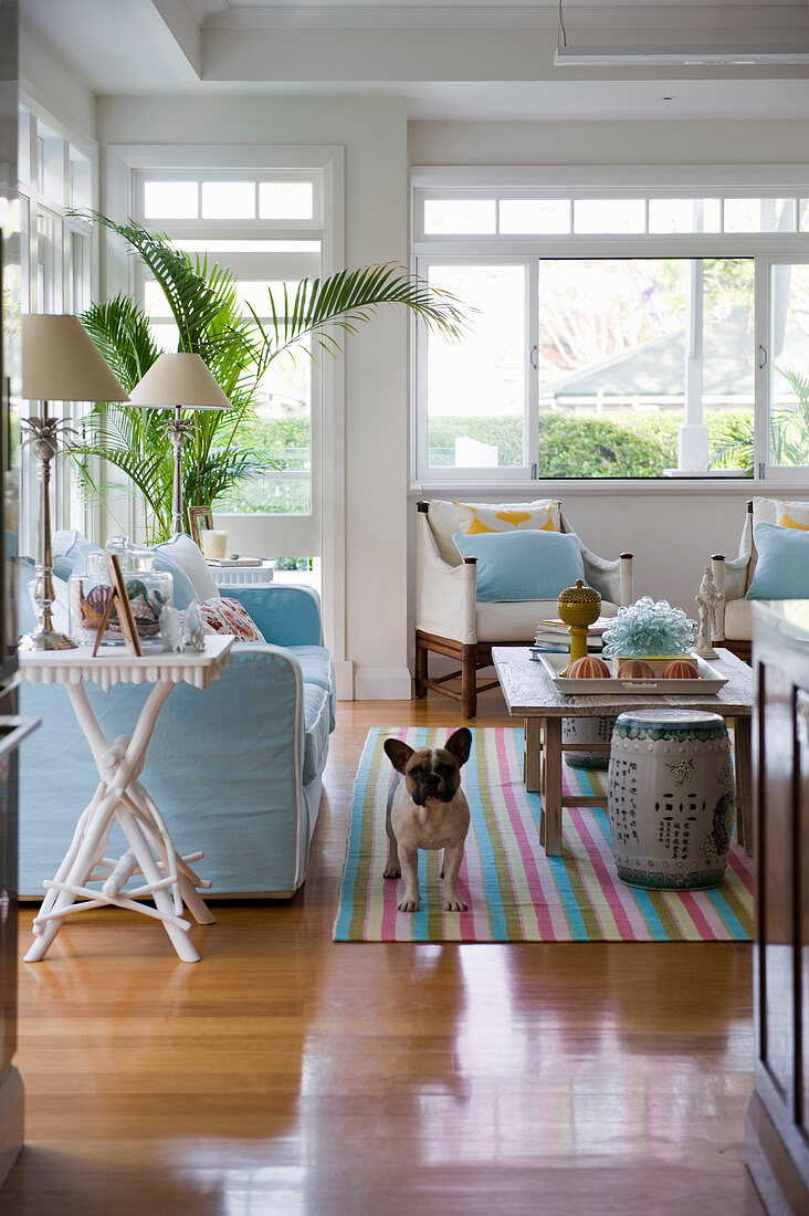 Dog In Exotic Living Room With Pale Blue Buy Image 12999009 Living4media