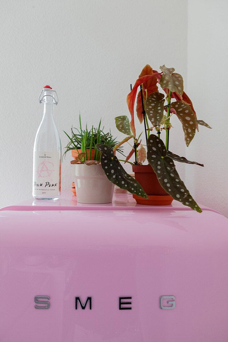 Houseplants and swing-top bottle on top of pink fridge