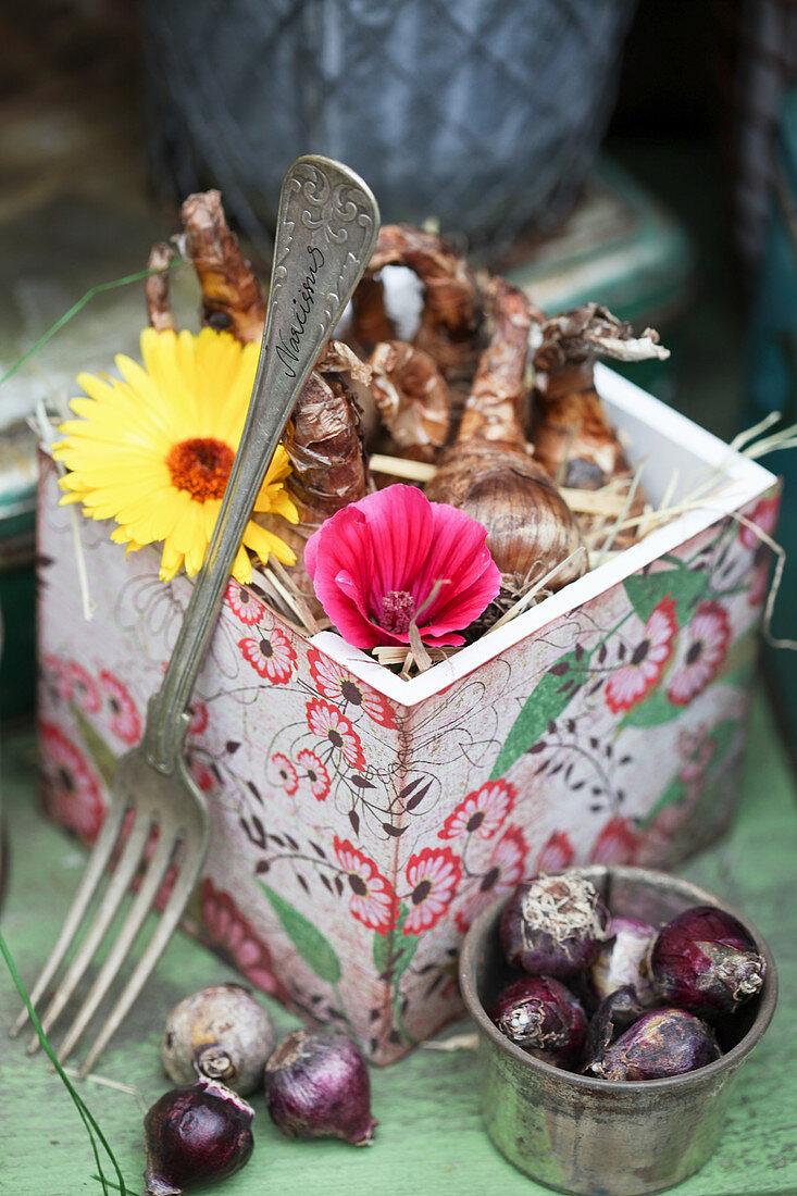 Kästchen mit Narzissenzwiebeln und Blüten von Ringelblume und Malve, Hyazinthenzwiebeln davor