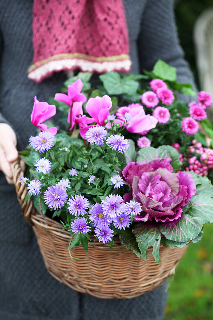 A basket planted in autumn with aster, cabbage, and cyclamen