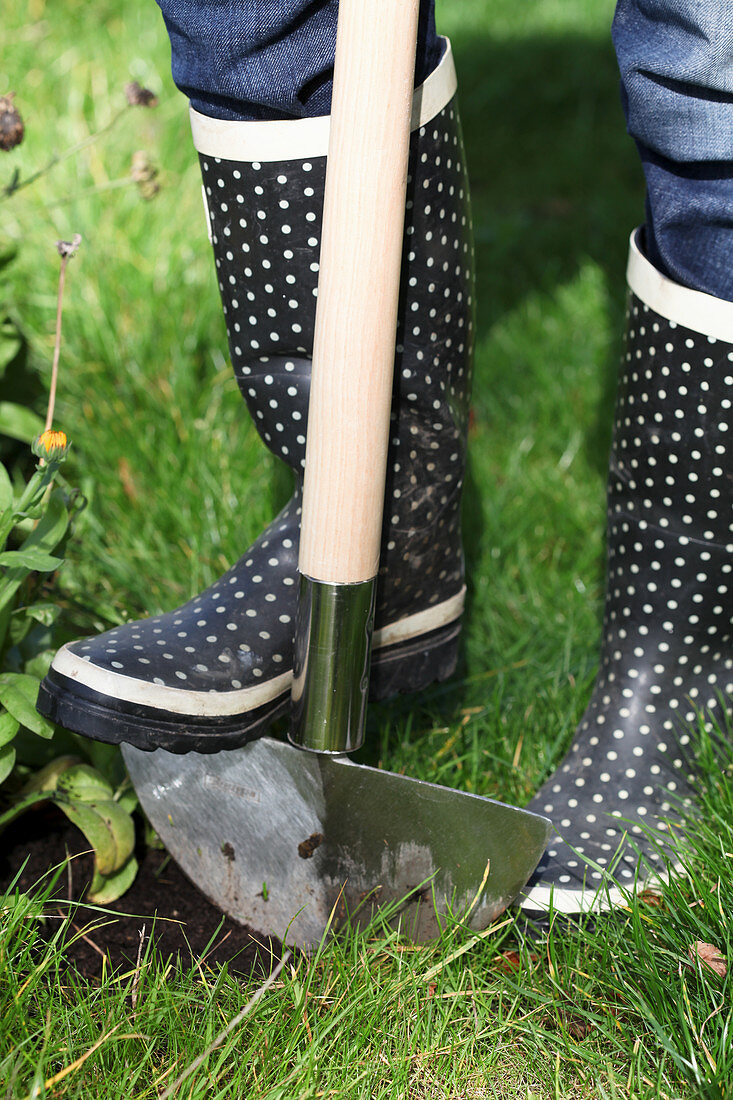 Cutting the edges of the lawn with an edger