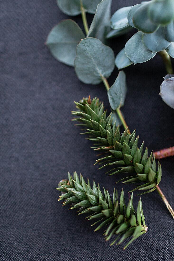 Sprigs of Japanese fir and eucalyptus on a dark surface