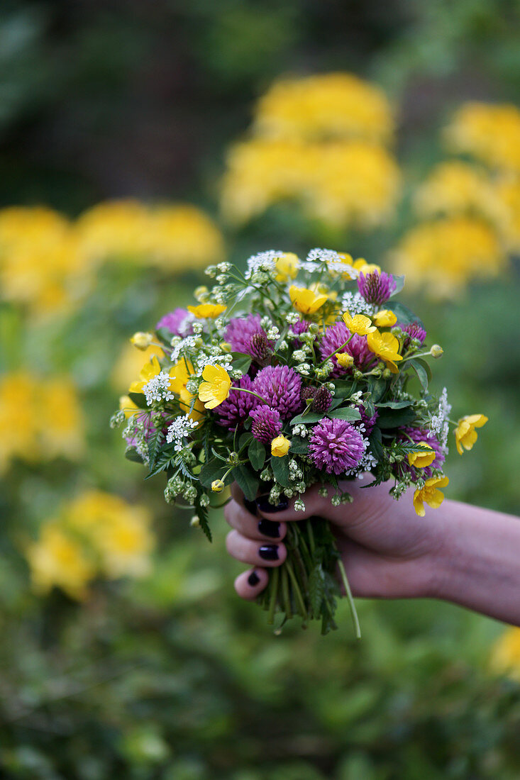 Hand holding a meadow bouquet of buttercups, red clover, and Caraway