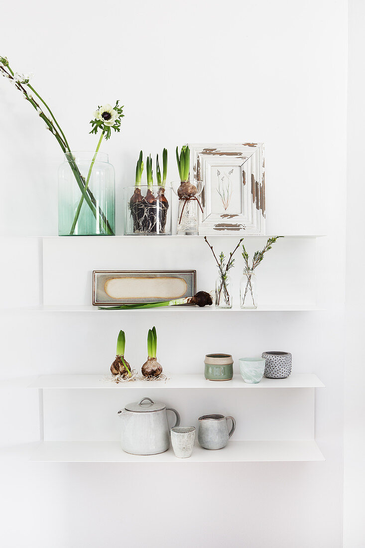 Spring anemones and hyacinths on wall-mounted shelves
