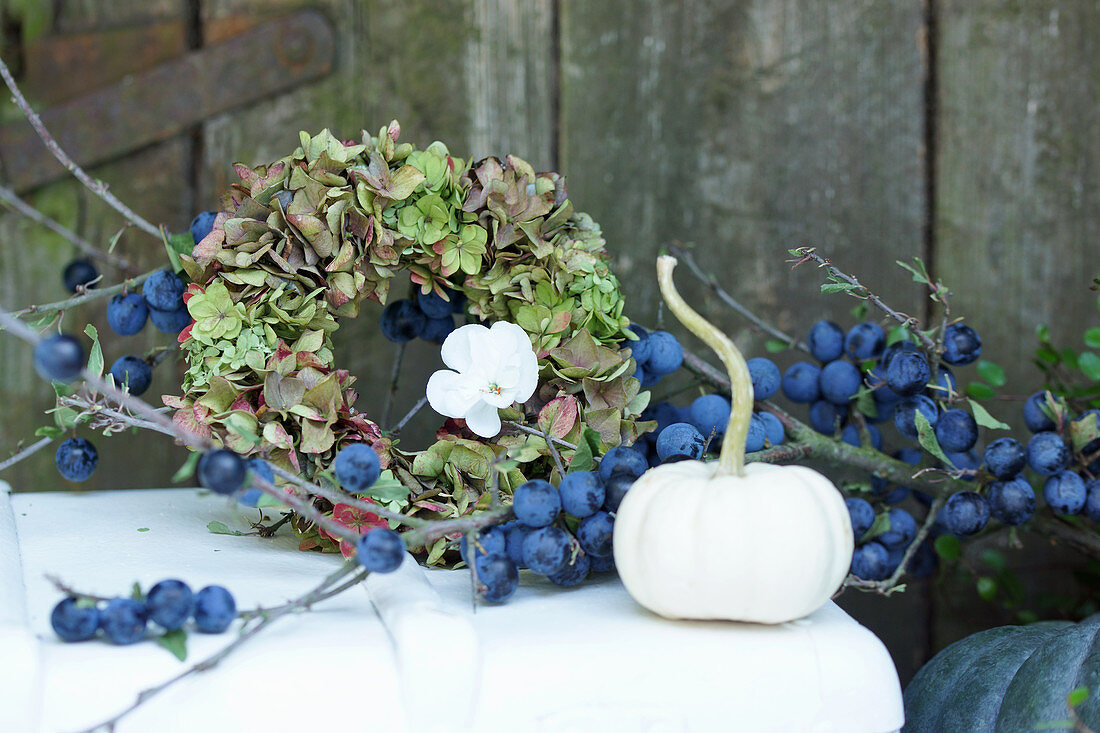 Autumn arrangement of branch of sloes, wreath of hydrangeas and white pumpkin