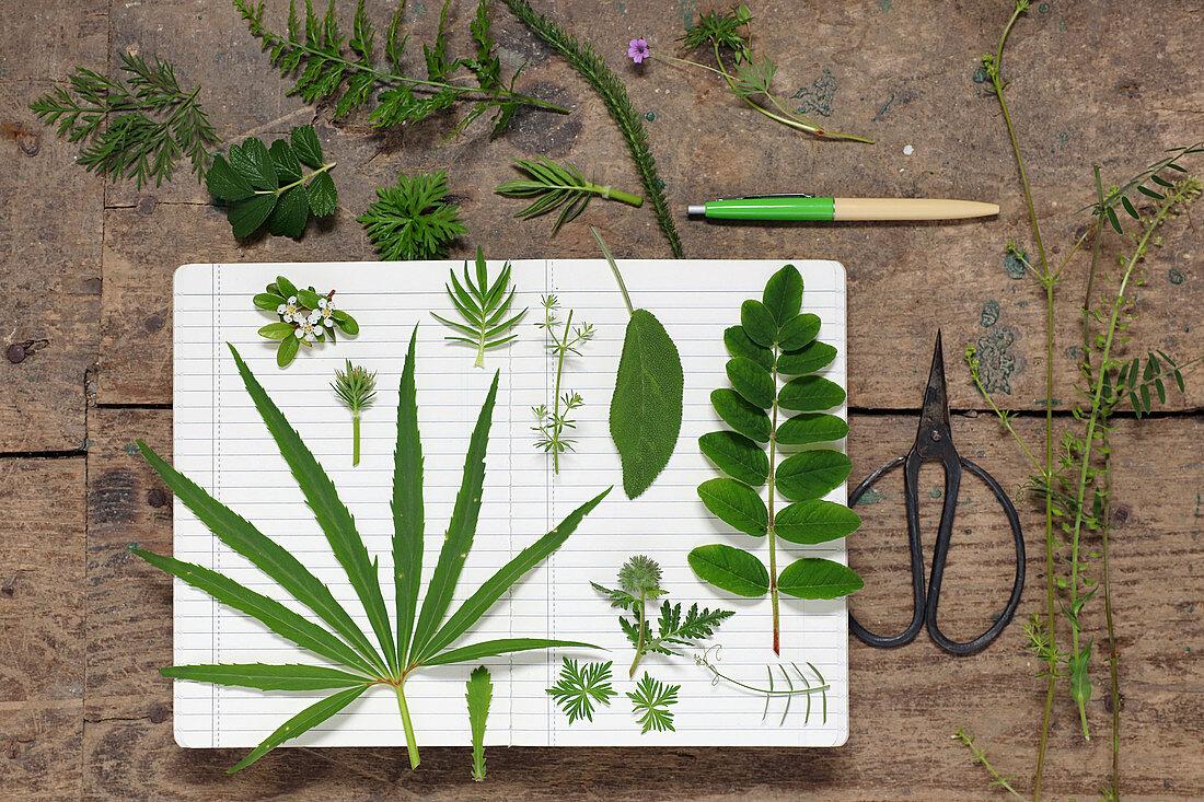 Various green leaves (geranium, fern, hellebore, salvia) lying on schoolbook