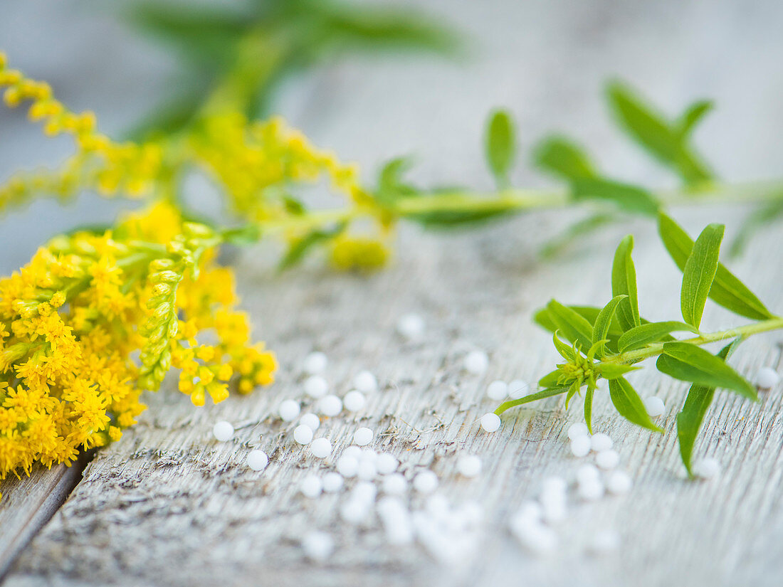 Goldenrod on a wooden background