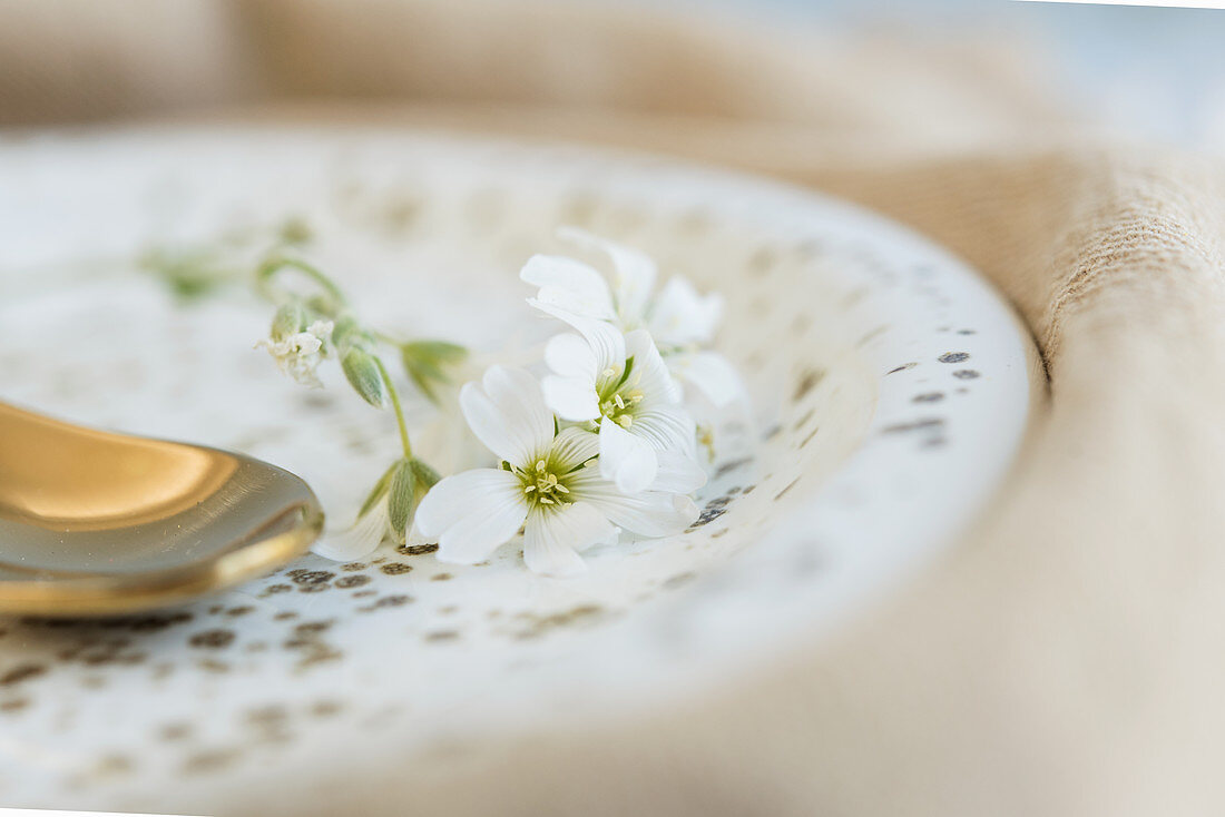 White flowers of snow-in-summer decorating plate with gold speckles