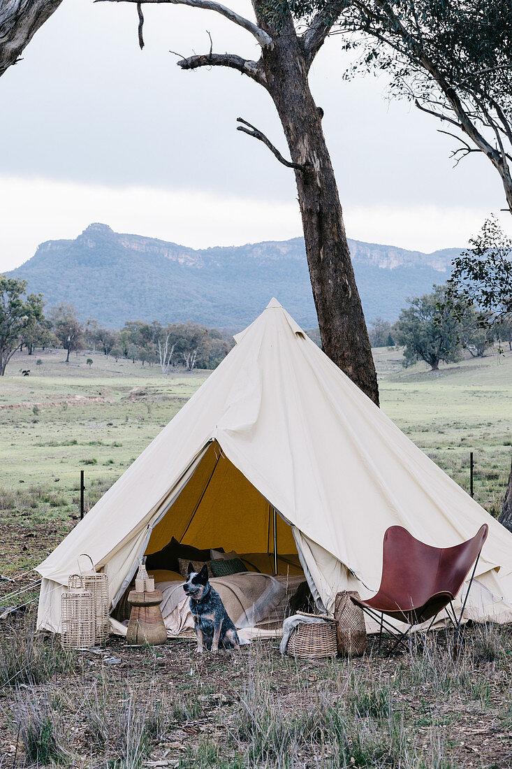 Hund sitzt vor einem runden Zelt mit Designerstuhl in der Natur