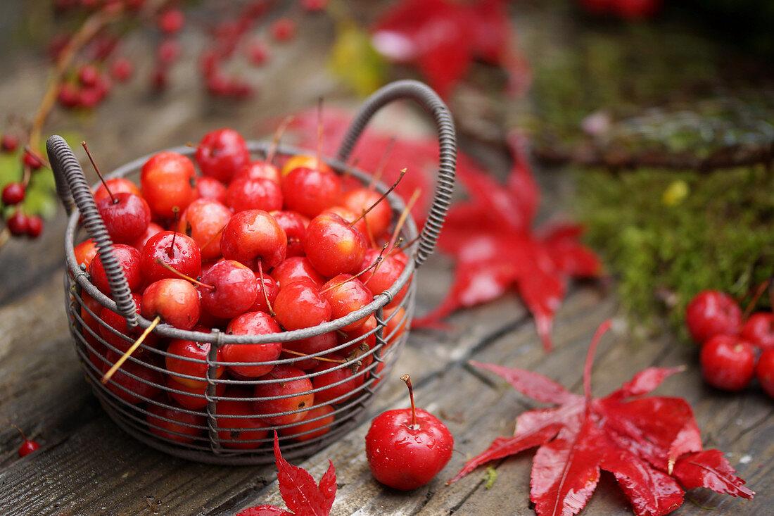 Basket of red crab apples