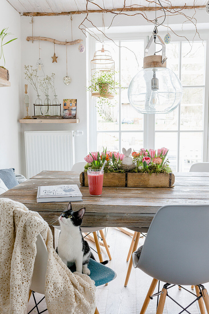 Cat sitting on chair in dining room with accessories made from natural materials