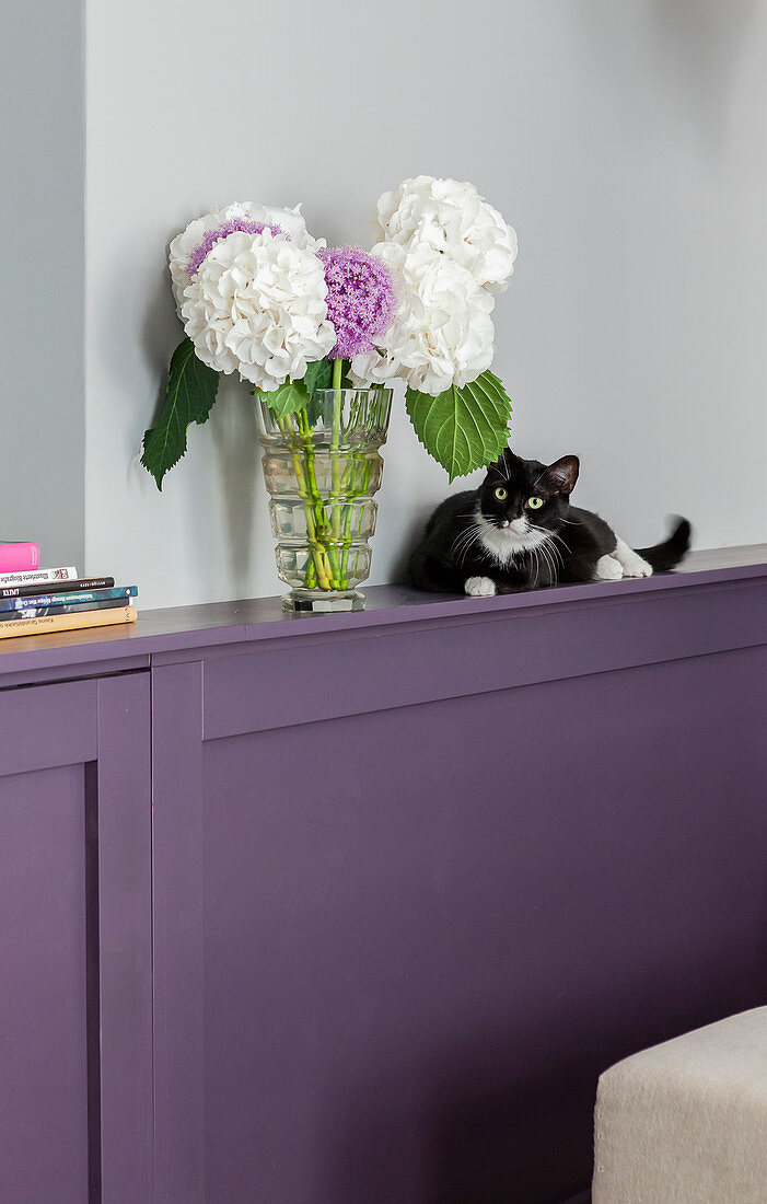 Vase of hydrangeas and cat on ledge of purple wainscoting