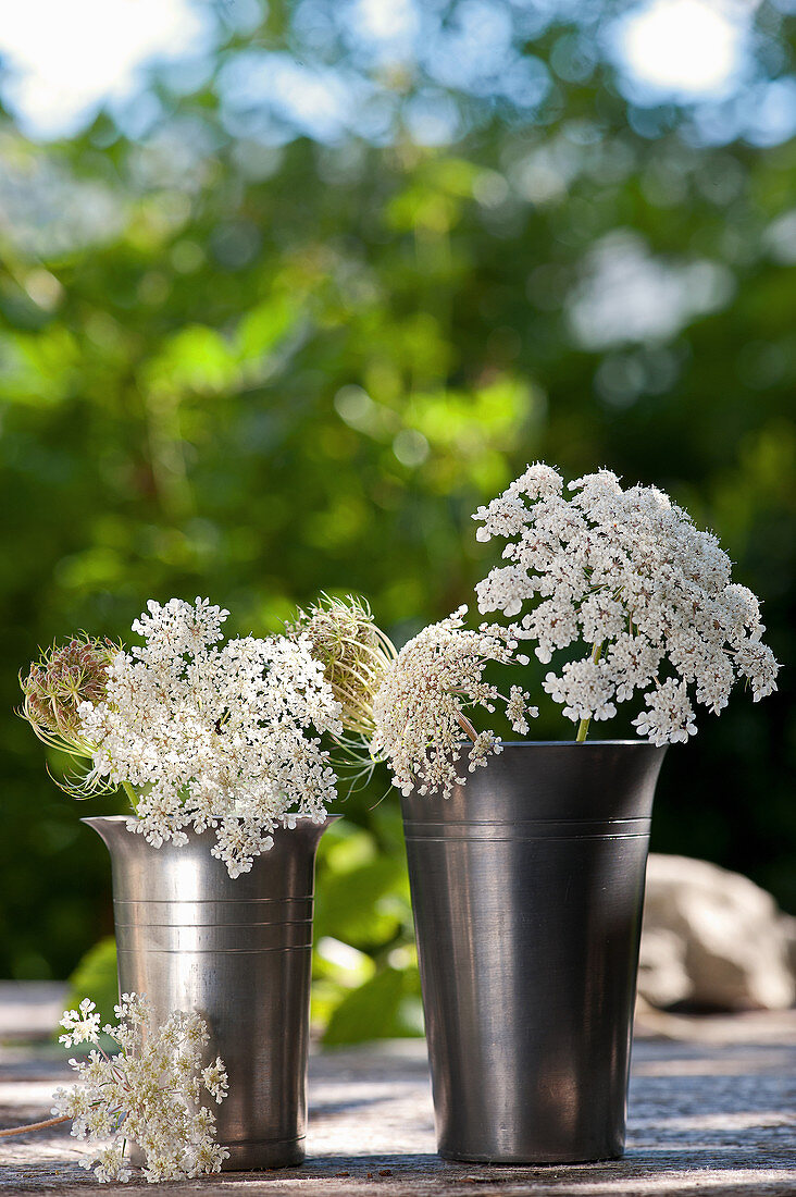 Queen Anne's lace in metal vases