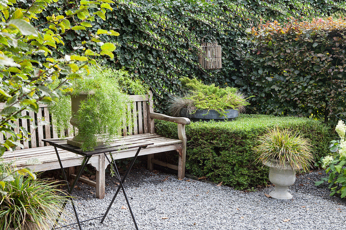 Seat in the garden with a bench in front of the ivy-covered wall
