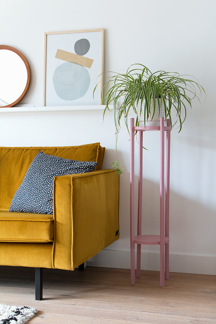 Spider plant on pink plant stand next to yellow sofa