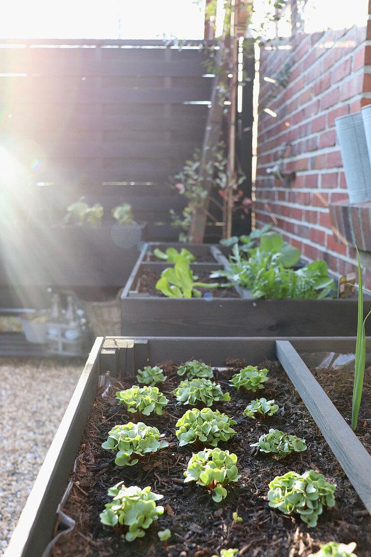 Sunlight falling onto freshly planted plug plants in black raised beds