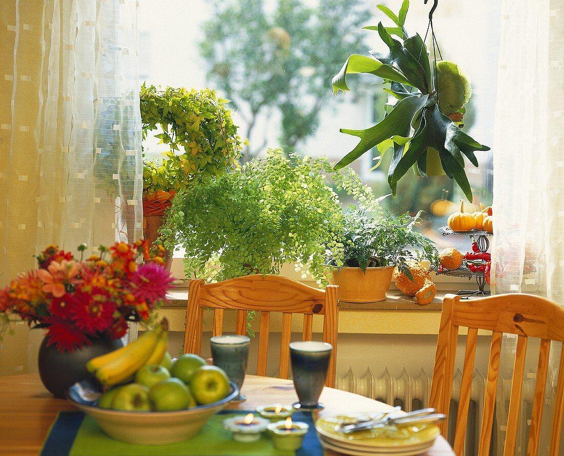 Tisch mit Geschirr, Obst & Blumen, im Fenster schöne Pflanzen