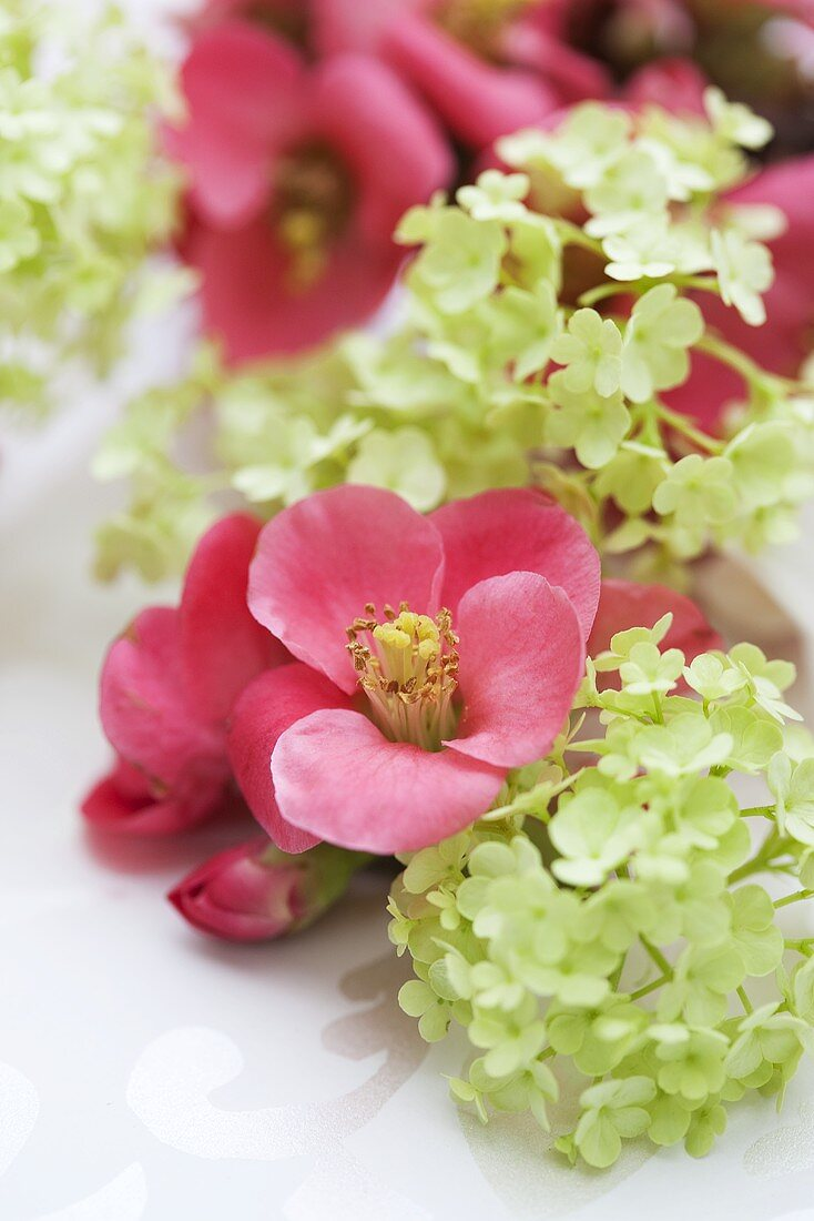 Floral decoration of japonica and viburnums