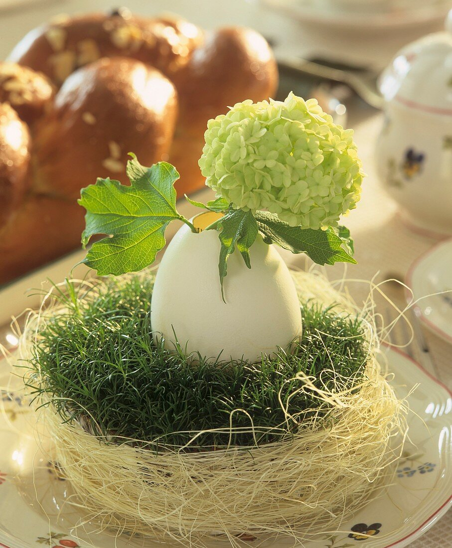 Easter nest with duck egg and Viburnum; bread plait