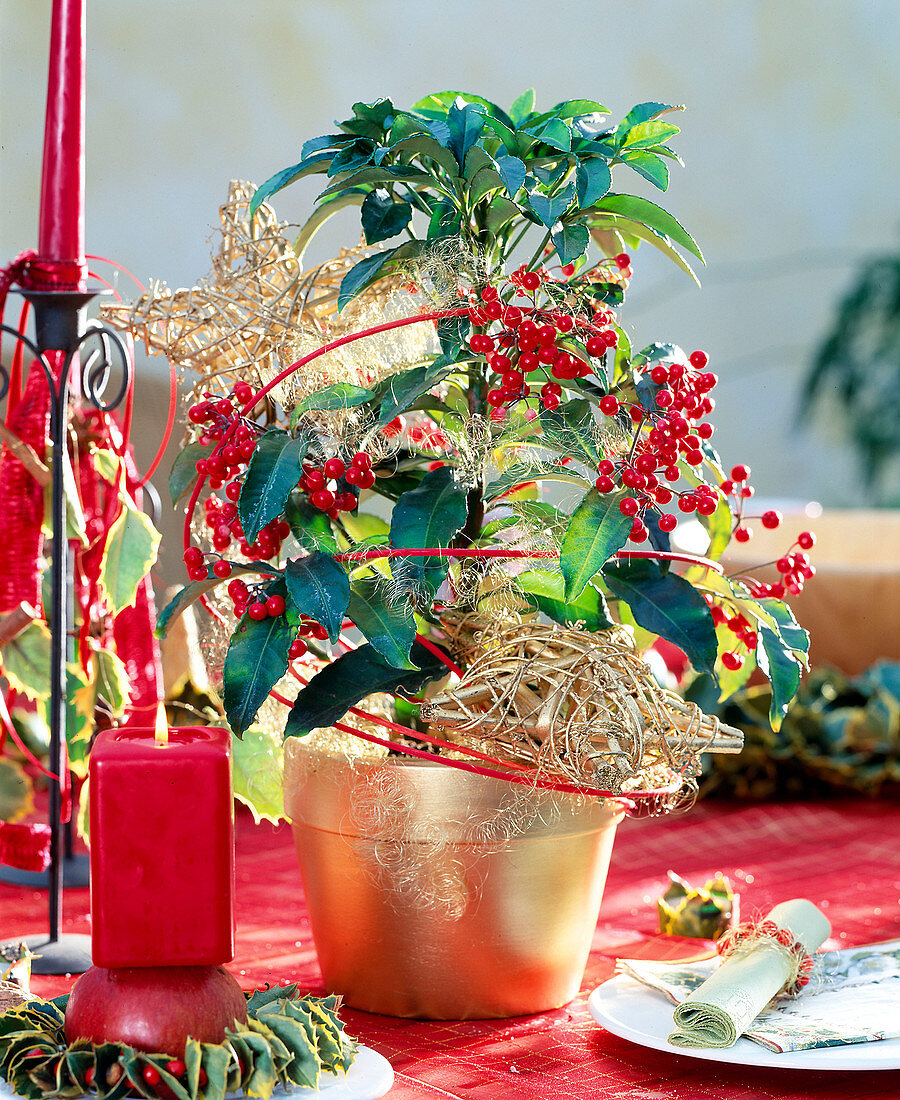 Coral ardisia with Christmas decorations