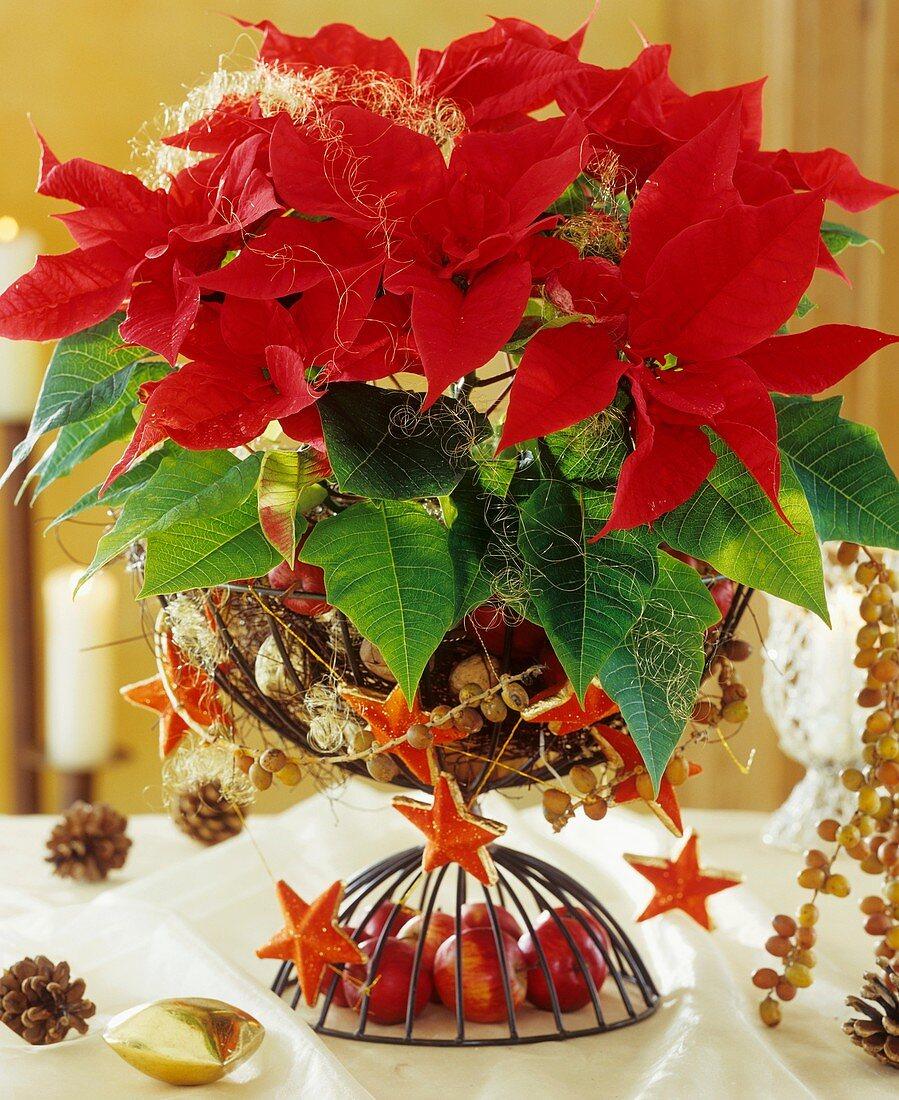 Roter Weihnachtsstern mit Adventsdeko