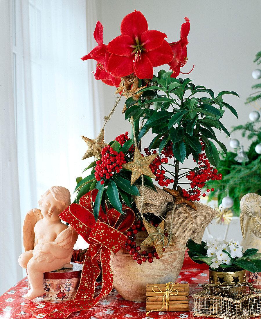 Advent arrangement with amaryllis