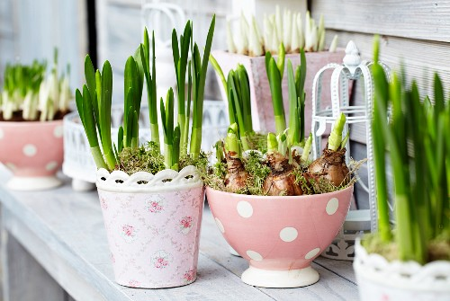 Spring flowers in various planters on wooden terrace table