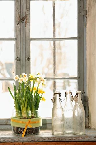Narzissen im Bonbonglas neben Vintage Flaschensammlung auf Fensterbank
