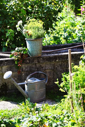 Zinc watering can, vintage pot of freshly cut flowers and branches of berries from cottage garden