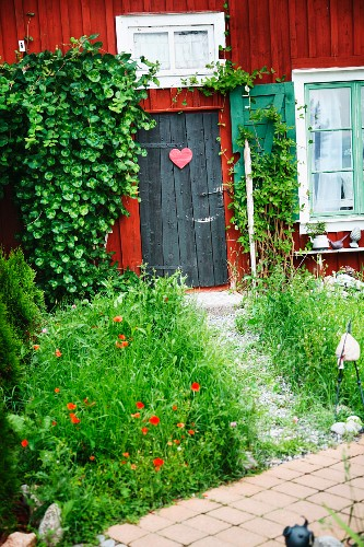 Poppies in small front garden of rustic wooden house with Falu-red facade
