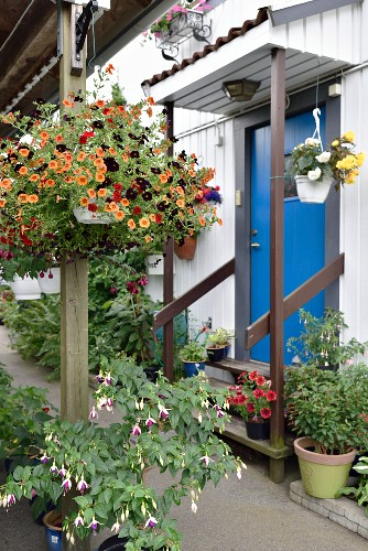 House entrance decorated with pots of flowering plants